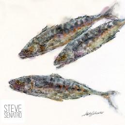 mackerel watercolor